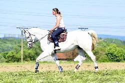 Rachell - Český teplokrevník - Koně na prodej