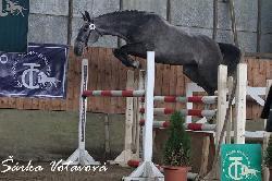 Roma - Český teplokrevník - Koně na prodej