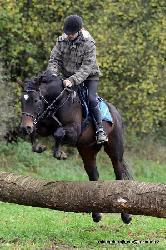 Lentiny Blue - Český teplokrevník - Koně na prodej
