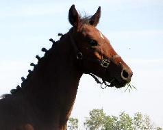 Toffifee - Jiné plemeno pony - Koně na prodej