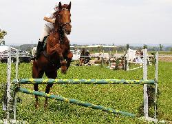 Fiesta - Český teplokrevník - Koně na prodej