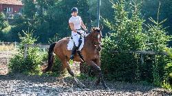 Cyrus - Český teplokrevník - Koně na prodej