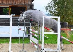 Calexandra - Český teplokrevník - Koně na prodej