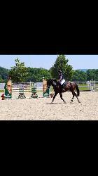 Diego - Český teplokrevník - Koně na prodej
