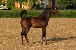 Monte Carlo - Český teplokrevník - Koně na prodej