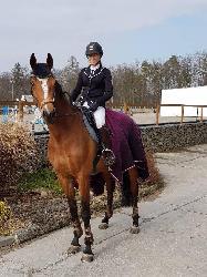 Lady - Český teplokrevník - Koně na prodej